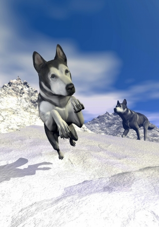 Two malamute dogs running and walking in the snowy mountain by beautiful day photo