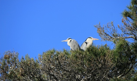 Two herons standing with no move in a tree by beautiful weather photo