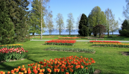 independance: Lots of beautiful tulips for springtime Tulips feast at Park of Independance in Morges, Switzerland. See Alps mountains in the background. Stock Photo