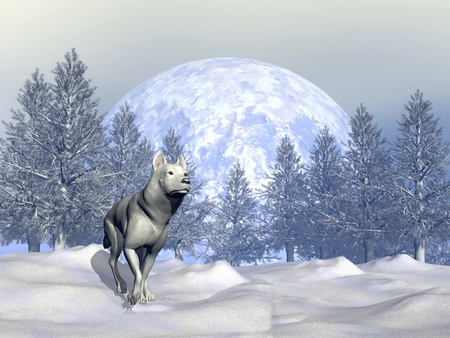 White wolf walking in the snowy mountain with fir trees by winter photo