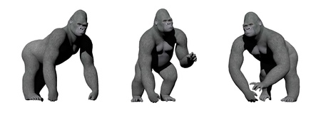 Gorillas with hand on the ground in four different positions in white background photo