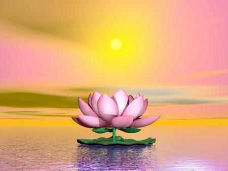 オレンジ日没で水の上の美しいピンクの蓮の花 写真素材