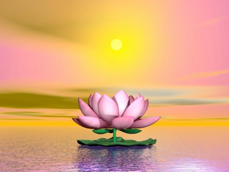 Beautiful pink lotus flower on the water by orange sunset photo