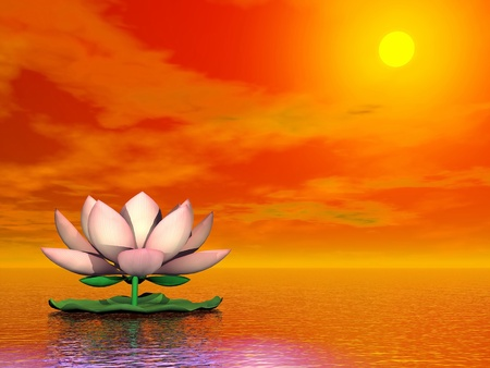 Beautiful pink lotus flower on the water by red sunset photo