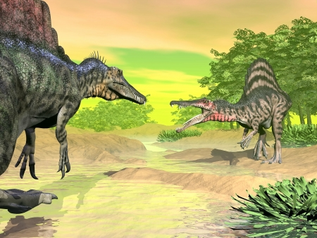spinosaurus: Two spinosaurus dinosaurs fighting mouth open face to face in nature by colorful day Stock Photo