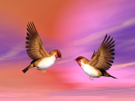 seduce: Two beautiful scarlett finch birds flying face to face as to talk or seduce each other in colorful background sky