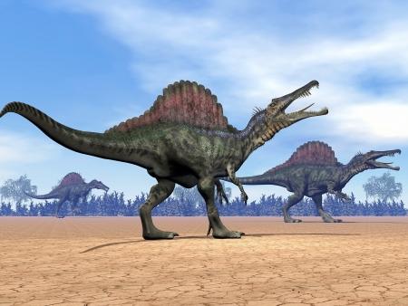 spinosaurus: Three spinosaurus dinosaurs walking in the desert by day Stock Photo