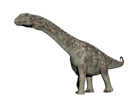Argentinosaurus dinosaur walking in white background photo