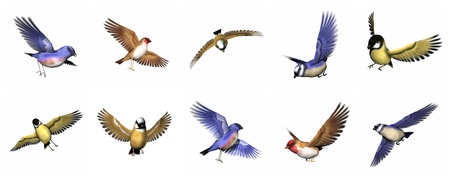 finch: Colorful finch birds in white background.