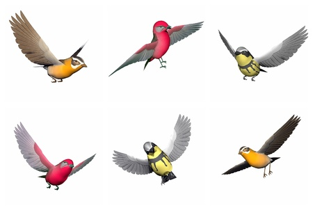 Colorful songbirds in white background. Grosbeak songbird, Tanager songbird and Wabler songbird