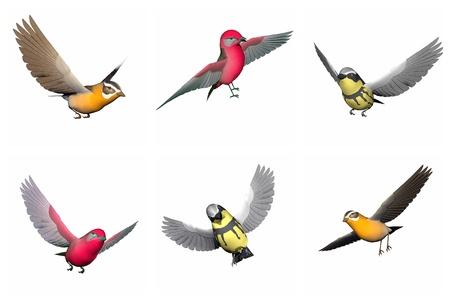 songbird: Colorful songbirds in white background. Grosbeak songbird, Tanager songbird and Wabler songbird