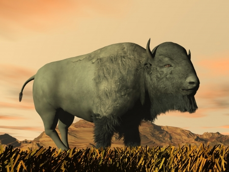 One bison standing in yellow grass in front of rocky mountain by sunset photo