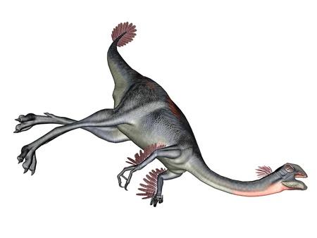 omnivorous: Gigantoraptor dinosaur lying dead in white background