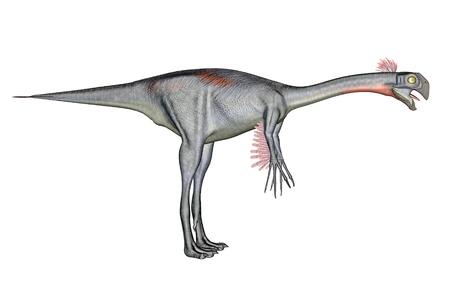 caudal: Gigantoraptor dinosaur standing quietly in white background Stock Photo