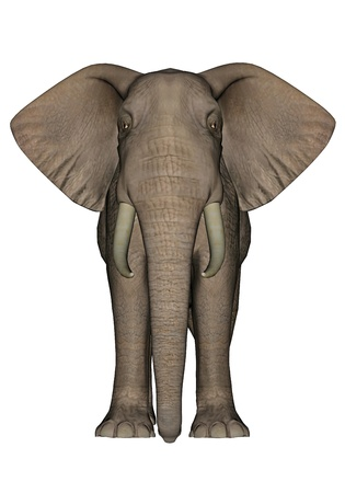 enormous: Big beautfiul elephant standing in white background Stock Photo