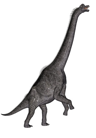 biggest animal: Brachiosaurus dinosaur walking head up in white background