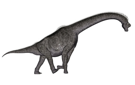 biggest animal: Brachiosaurus dinosaur walking head down in white background Stock Photo