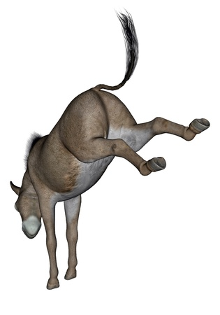 Common donkey rearing back feet in white background photo