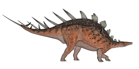 caudal: Kentrosaurus dinosaur with lots of spike on the back in white background Stock Photo