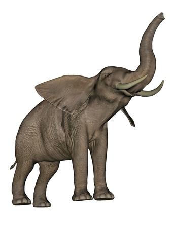 흰색 배경에서 큰 beautfiul 코끼리 트렁크