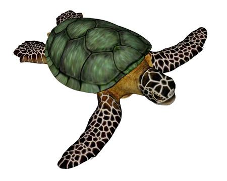 Sea turtle standing quietly in white background Standard-Bild