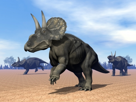 Three dinoceratops dinosaur in the desert by daylight
