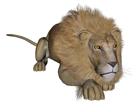 royal safari: Beautiful lion with big mane hunting in white background