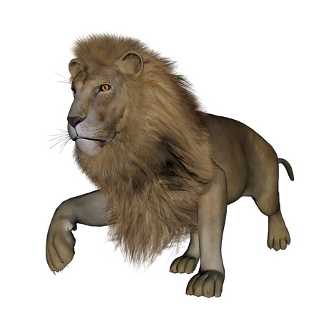3d lion: Beautiful lion with big mane walking in white background
