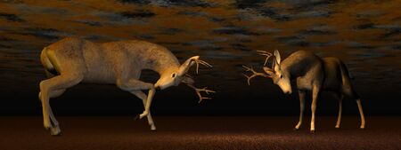 animal mating: Fallow buck deer fighting one another in brown background light