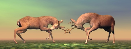 whitetail deer: Fallow buck deer fighting one another in brown and green background light