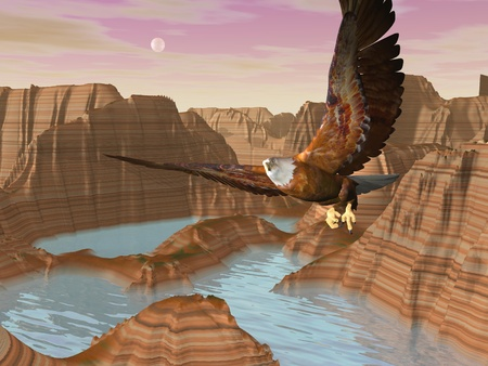 eagle canyon: Beautiful eagle flying above canyons with river by full moon light Stock Photo