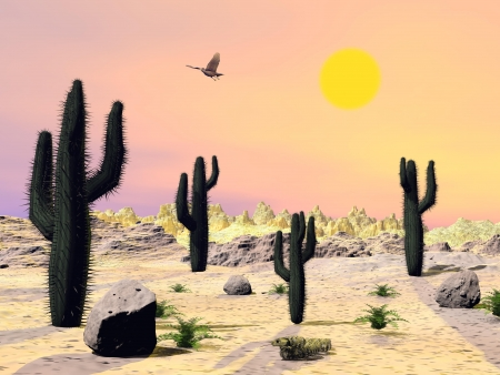 Cactus and stones in the desert with eagle flying by beautiful sunset photo