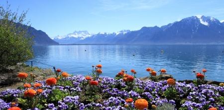 ジュネーブ湖でカラフルな春の花、モントルー、スイス連邦共和国、バック グラウンドでアルプスの山々 を参照してください。