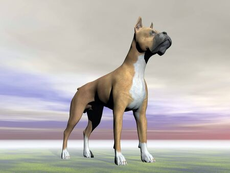 German boxer dog standing on the ground in grey cloudy background Stock Photo - 21404737
