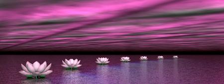 lirio de agua: Hermosas rosas nen�fares creando un camino hacia el sol por las luces polares violeta