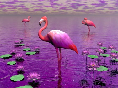 Beautiful pink flamingos among water lilies and violet sky