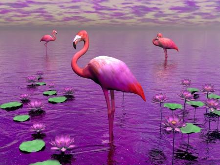 Belles flamants roses parmi les nénuphars et le ciel violet Banque d'images