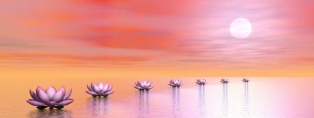 日没まで太陽へのパスを作成する美しいピンクの睡蓮