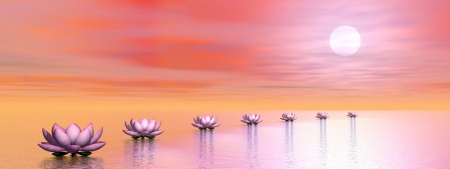 Beautiful pink water lilies creating a path to the sun by sunset