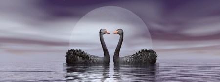 Two black swans in front of moon on the water by beautiful night