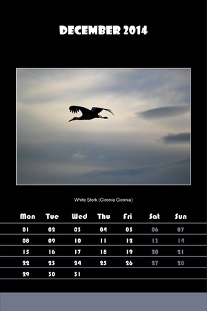 Colorful english calendar for december 2014 in black background, white stork  ciconia ciconia  picture photo