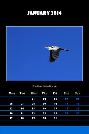 Colorful english calendar for january 2014 in black background, grey heron  ardea cinerea  picture photo