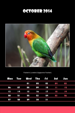Colorful english calendar for october 2014 in black background, fischer s lovebird  agapornis fischeri  picture photo