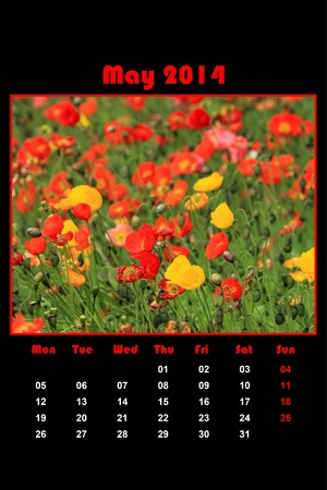 Colorful english calendar for may 2014 in black background, dandelions and green grass photo