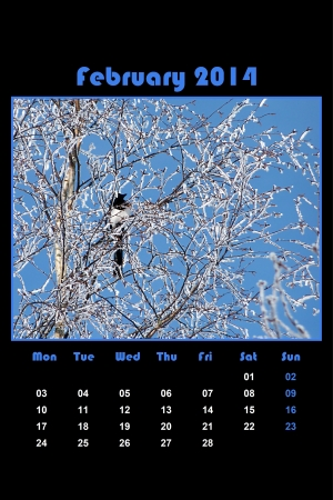 Colorful english calendar for february 2014 in black background, frozen branches and magpie photo
