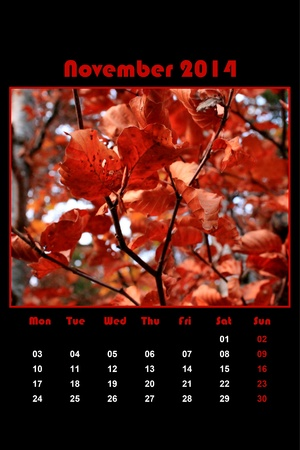 Colorful english calendar for november 2014 in black background, red leaves photo