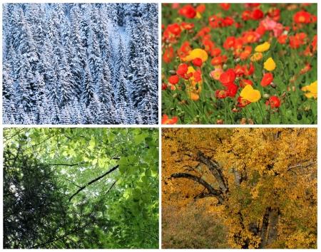 Four seasons collage   spring, summer, autumn, winter photo