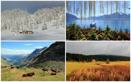 Four seasons landscape collage   spring, summer, autumn, winter photo