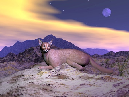 lurk: Caracal (caracal caracal) or desert lynx lying quietly on the rocks in mountain by full moon night with colorful clouds