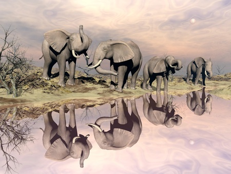 Many elephants standing in the desert next to quiet water by sunset light photo